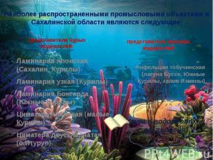 Наиболее распространенными промысловыми объектами в Сахалинской области являются
