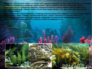 Водоросли - это не только главная составная часть морских сообществ, но еще и од