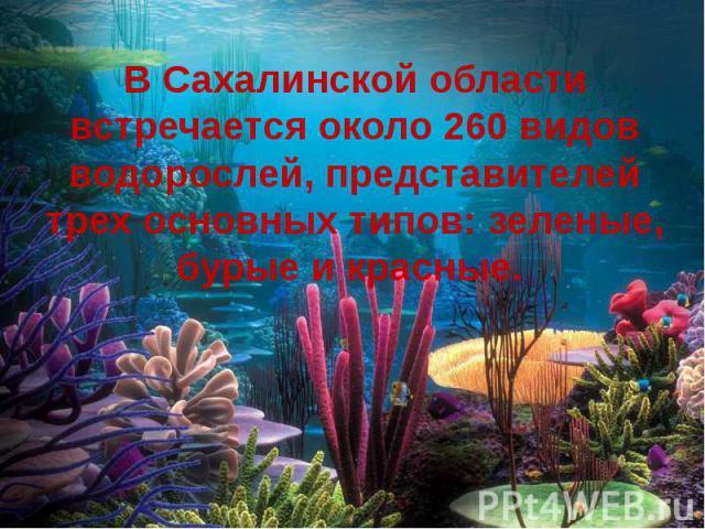 В Сахалинской области встречается около 260 видов водорослей, представителей трех основных типов: зеленые, бурые и красные.