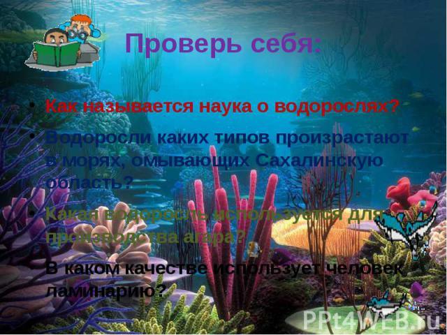 Проверь себя: Как называется наука о водорослях?Водоросли каких типов произрастают в морях, омывающих Сахалинскую область?Какая водоросль используется для производства агара?В каком качестве использует человек ламинарию?