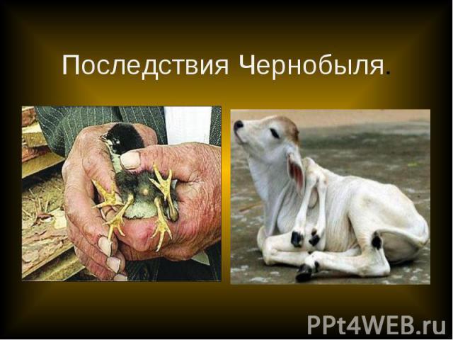 Последствия Чернобыля.