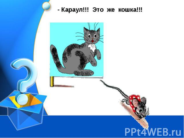 Караул!!! Это же кошка!!!