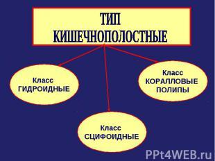 ТИП КИШЕЧНОПОЛОСТНЫЕ Класс ГИДРОИДНЫЕ Класс СЦИФОИДНЫЕ КлассКОРАЛЛОВЫЕ ПОЛИПЫ