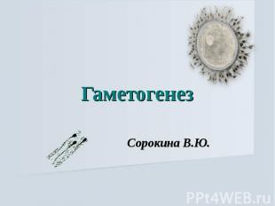 Гаметогенез Сорокина В.Ю.