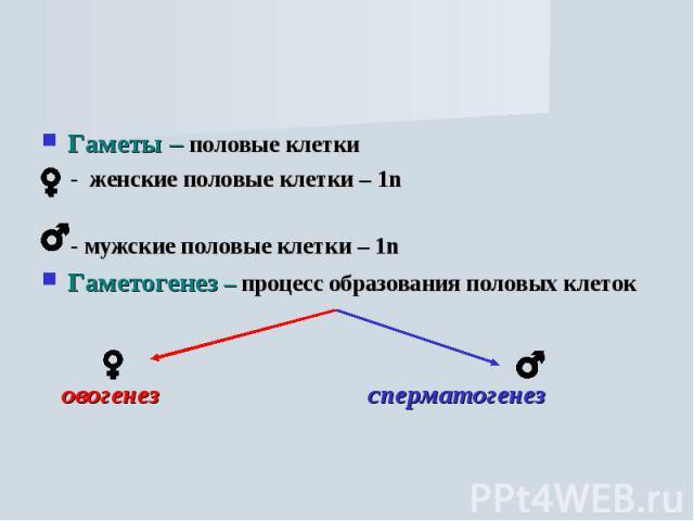 Гаметы – половые клетки - женские половые клетки – 1n - мужские половые клетки – 1nГаметогенез – процесс образования половых клеток овогенез сперматогенез