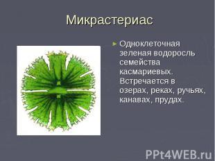 Микрастериас Одноклеточная зеленая водоросль семейства касмариевых. Встречается