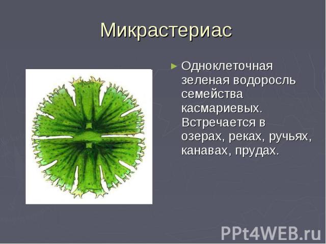 Микрастериас Одноклеточная зеленая водоросль семейства касмариевых. Встречается в озерах, реках, ручьях, канавах, прудах.