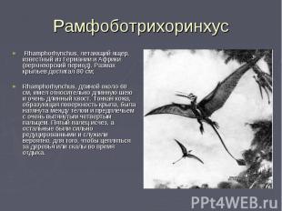 Rhamphorhynchus, летающий ящер, известный из Германии и Африки (верхнеюрский пер