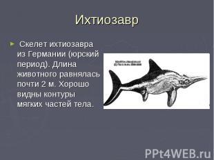 Скелет ихтиозавра из Германии (юрский период). Длина животного равнялась почти 2