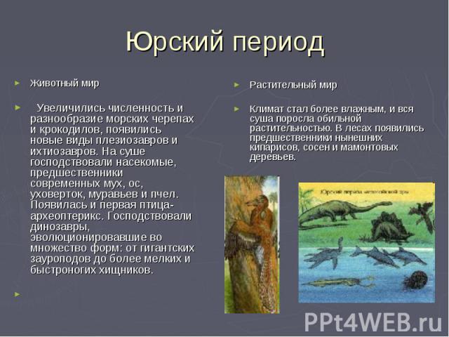 Юрский период Животный мир Увеличились численность и разнообразие морских черепах и крокодилов, появились новые виды плезиозавров и ихтиозавров. На суше господствовали насекомые, предшественники современных мух, ос, уховерток, муравьев и пчел. Появи…