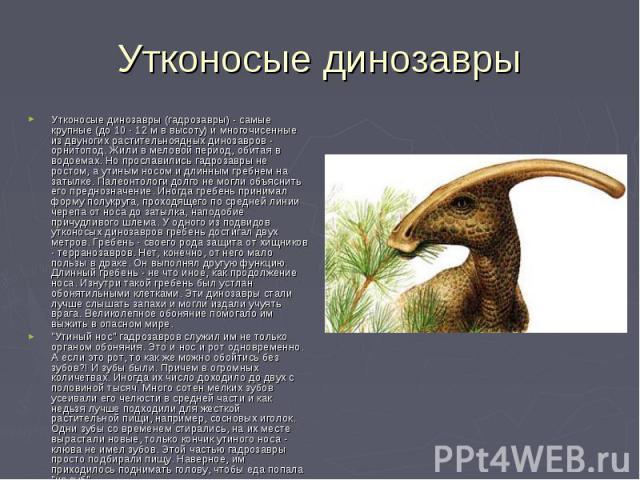 Утконосые динозавры Утконосые динозавры (гадрозавры) - самые крупные (до 10 - 12 м в высоту) и многочисенные из двуногих растительноядных динозавров - орнитопод. Жили в меловой период, обитая в водоемах. Но прославились гадрозавры не ростом, а утины…