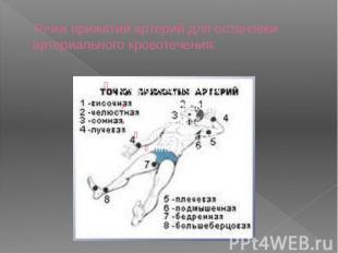 Точки прижатий артерий для остановки артериального кровотечения:
