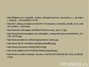 http://lidijavk.ucoz.ru/publ/k_urokam_biologii/osnovnye_aromorfozy_v_ehvoljucii_