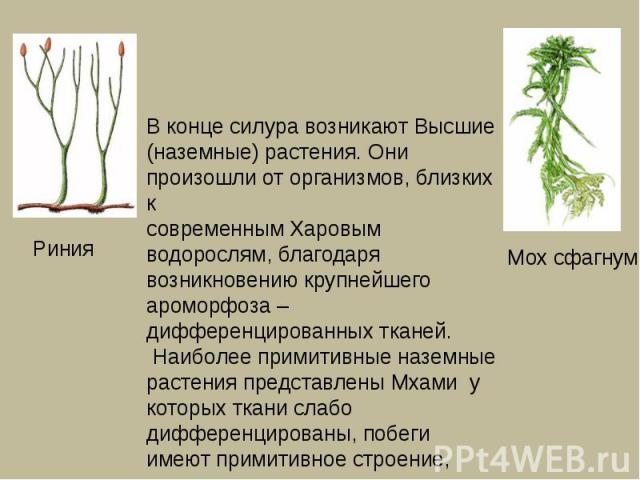 В конце силура возникают Высшие (наземные) растения. Они произошли от организмов, близких к современным Харовым водорослям, благодаря возникновению крупнейшего ароморфоза – дифференцированных тканей. Наиболее примитивные наземные растения представле…