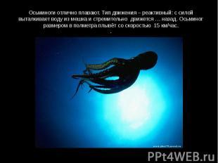 Осьминоги отлично плавают. Тип движения – реактивный: с силой выталкивает воду и