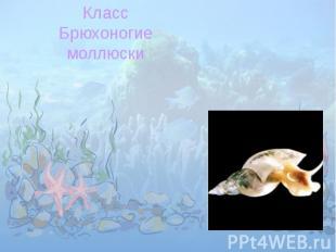 КлассБрюхоногиемоллюски