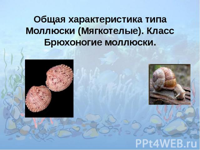 Общая характеристика типа Моллюски (Мягкотелые). Класс Брюхоногие моллюски.
