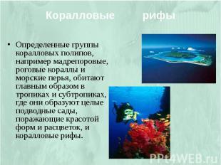 Коралловые рифы Определенные группы коралловых полипов, например мадрепоровые, р