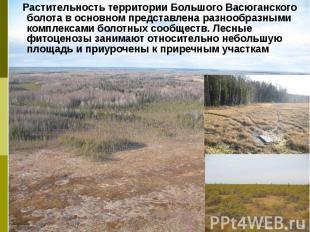 Растительность территории Большого Васюганского болота в основном представлена р