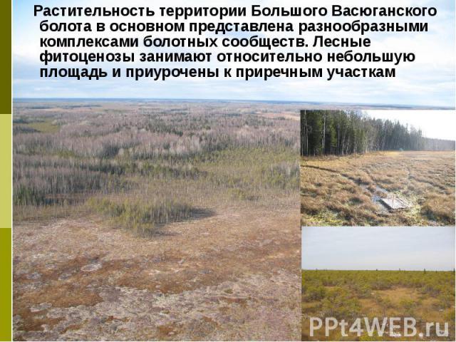 Растительность территории Большого Васюганского болота в основном представлена разнообразными комплексами болотных сообществ. Лесные фитоценозы занимают относительно небольшую площадь и приурочены к приречным участкам