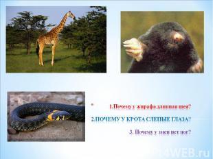 1.Почему у жирафа длинная шея? 2.ПОЧЕМУ У КРОТА СЛЕПЫЕ ГЛАЗА? 3. Почему у змеи н