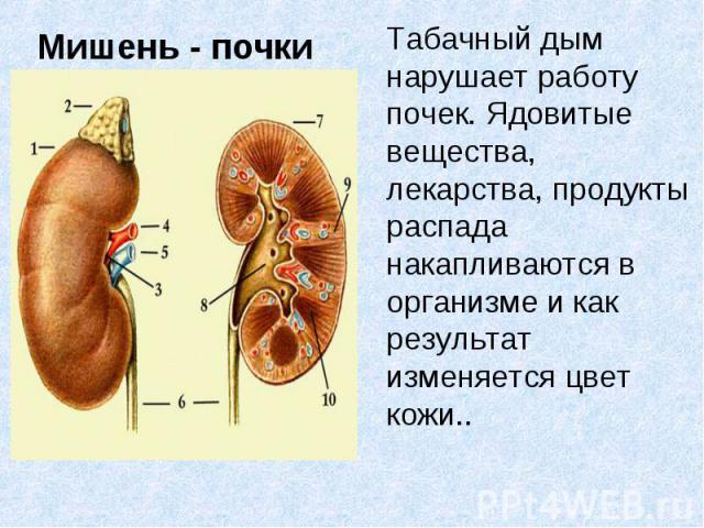 Табачный дым нарушает работу почек. Ядовитые вещества, лекарства, продукты распада накапливаются в организме и как результат изменяется цвет кожи..