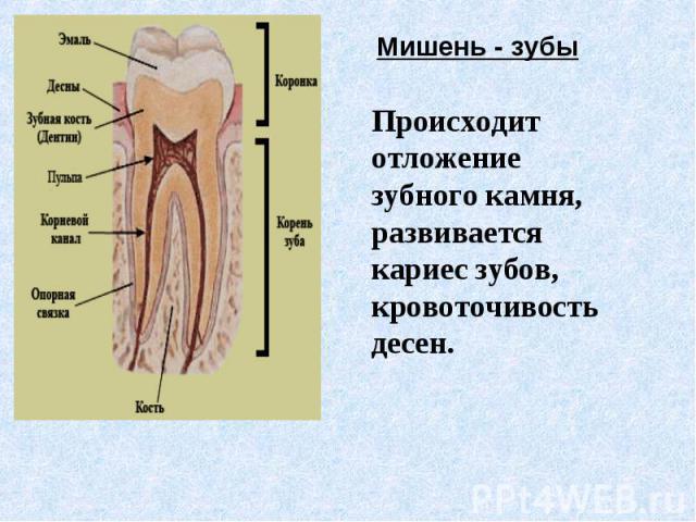 Происходит отложение зубного камня, развивается кариес зубов, кровоточивость десен.