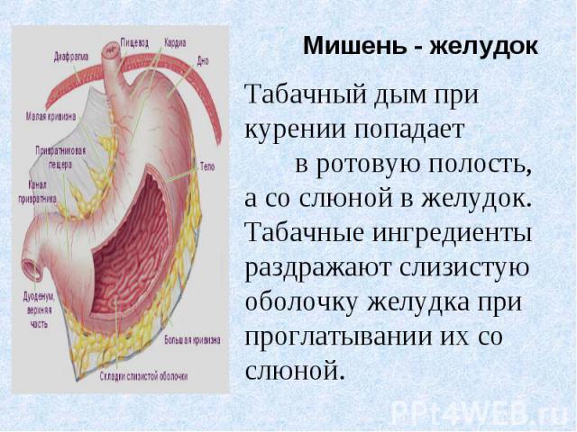 Табачный дым при курении попадает в ротовую полость, а со слюной в желудок. Табачные ингредиенты раздражают слизистую оболочку желудка при проглатывании их со слюной.