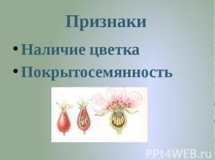 Признаки Наличие цветкаПокрытосемянность