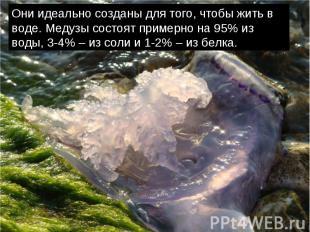 Они идеально созданы для того, чтобы жить в воде. Медузы состоят примерно на 95%