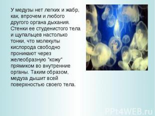 У медузы нет легких и жабр, как, впрочем и любого другого органа дыхания. Стенки
