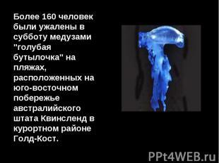 """Более 160 человек были ужалены в субботу медузами """"голубая бутылочка"""" на пляжах,"""