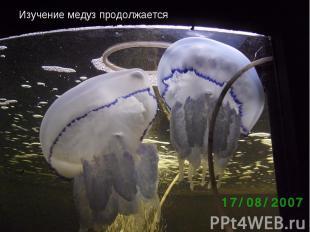 Изучение медуз продолжается