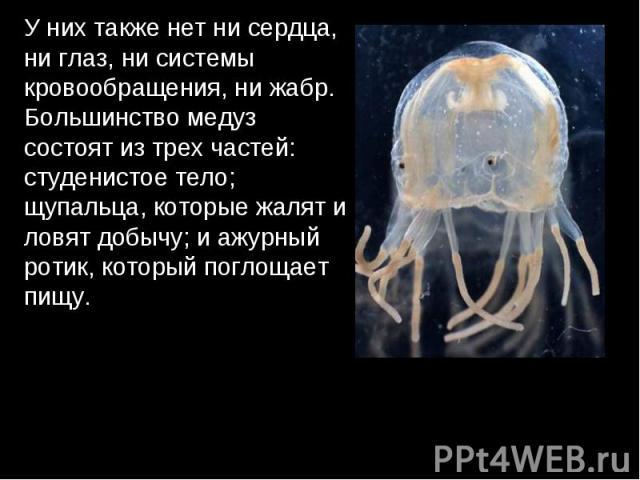 У них также нет ни сердца, ни глаз, ни системы кровообращения, ни жабр. Большинство медуз состоят из трех частей: студенистое тело; щупальца, которые жалят и ловят добычу; и ажурный ротик, который поглощает пищу.