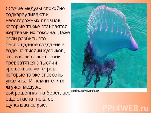 Жгучие медузы спокойно подкарауливают и неосторожных пловцов, которые также становятся жертвами их токсина. Даже если разбить это беспощадное создание в воде на тысячи кусочков, это вас не спасет – они превратятся в тысячи крошечных монстров, которы…