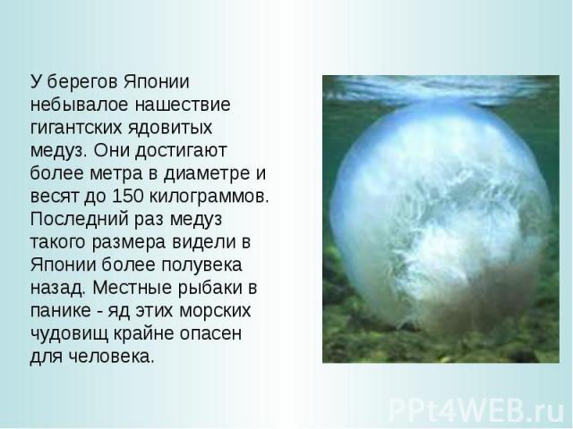 У берегов Японии небывалое нашествие гигантских ядовитых медуз. Они достигают более метра в диаметре и весят до 150 килограммов. Последний раз медуз такого размера видели в Японии более полувека назад. Местные рыбаки в панике - яд этих морских чудов…