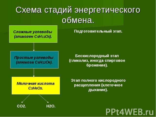 Схема стадий энергетического обмена. Сложные углеводы (гликоген C6H11O5). Простые углеводы (глюкоза C6H12O6). Молочная кислотаC3H6O3. Подготовительный этап. Бескислородный этап (гликолиз, иногда спиртовое брожение). Этап полного кислородного расщепл…