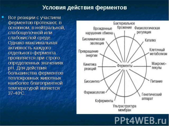 Все реакции с участием ферментов протекают, в основном, в нейтральной, слабощелочной или слабокислой среде. Однако максимальная активность каждого отдельного фермента проявляется при строго определенных значениях pH. Для действия большинства фермент…