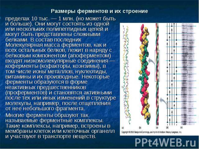пределах 10 тыс. — 1 млн. (но может быть и больше). Они могут состоять из одной или нескольких полипептидных цепей и могут быть представлены сложными белками. В состав последних Молекулярная масса ферментов, как и всех остальных белков, лежит в наря…