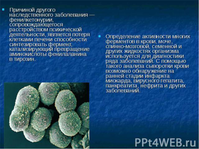 Причиной другого наследственного заболевания — фенилкетонурии, сопровождающегося расстройством психической деятельности, является потеря клетками печени способности синтезировать фермент, катализирующий превращение аминокислотыфенилаланина втирози…