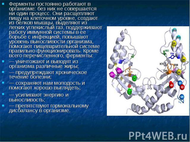 Ферменты постоянно работают в организме: без них не совершается ни один процесс. Они расщепляют пищу на клеточном уровне, создают из белков мышцы, выделяют из легких углекислый газ, поддерживают работу иммунной системы в ее борьбе с инфекцией, повыш…