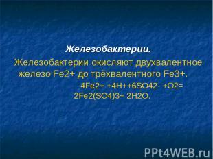 Железобактерии.Железобактерии окисляют двухвалентное железо Fe2+ до трёхвалентно