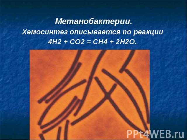 Метанобактерии.Метанобактерии.Хемосинтез описывается по реакции 4H2 + CO2 = CH4 + 2H2O.