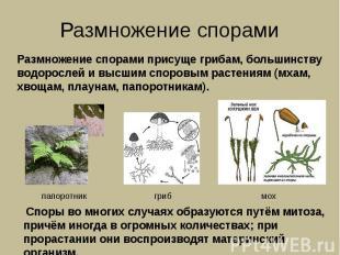 Размножение спорами Размножение спорами присуще грибам, большинству водорослей и