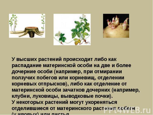 У высших растений происходит либо как распадание материнской особи на две и более дочерние особи (например, при отмирании ползучих побегов или корневищ, отделении корневых отпрысков), либо как отделение от материнской особи зачатков дочерних (наприм…