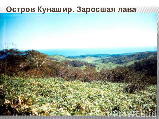 Остров Кунашир. Заросшая лава