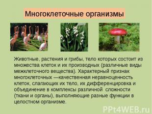 Многоклеточные организмы Животные, растения и грибы, тело которых состоит из мно