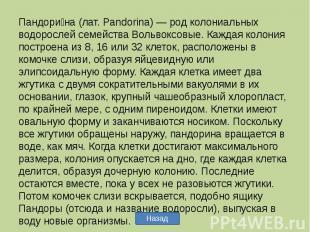 Пандорина (лат. Pandorina) — род колониальных водорослей семейства Вольвоксовые.