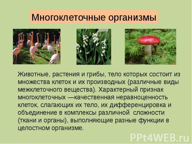 Многоклеточные организмы Животные, растения и грибы, тело которых состоит из множества клеток и их производных (различные виды межклеточного вещества). Характерный признак многоклеточных —качественная неравноценность клеток, слагающих их тело, их ди…