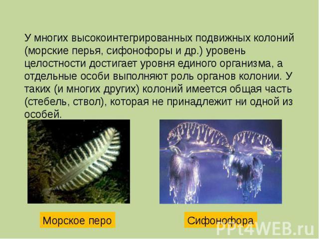У многих высокоинтегрированных подвижных колоний (морские перья, сифонофоры и др.) уровень целостности достигает уровня единого организма, а отдельные особи выполняют роль органов колонии. У таких (и многих других) колоний имеется общая часть (стебе…